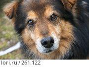 Собака. Стоковое фото, фотограф Куракевич Иван / Фотобанк Лори