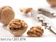 Купить «Грецкий орех», фото № 261874, снято 23 сентября 2005 г. (c) Кравецкий Геннадий / Фотобанк Лори