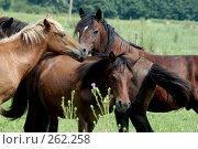 Купить «Кони сбились в кучу», фото № 262258, снято 18 августа 2004 г. (c) Виктор Филиппович Погонцев / Фотобанк Лори
