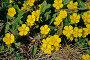 Весенние цветы, фото № 262694, снято 19 апреля 2008 г. (c) Юрий Борисенко / Фотобанк Лори