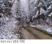 Купить «Лесная дорога», фото № 263190, снято 5 ноября 2007 г. (c) Вячеслав Потапов / Фотобанк Лори