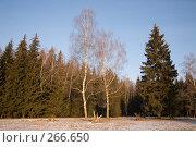 Купить «Зимний лес», фото № 266650, снято 1 января 2008 г. (c) Вячеслав Потапов / Фотобанк Лори
