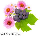Купить «Осенний натюрморт из цветов и ветки винограда», фото № 266862, снято 1 октября 2006 г. (c) Анатолий Заводсков / Фотобанк Лори