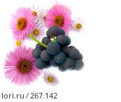 Купить «Натюрморт из цветов и кисти винограда», фото № 267142, снято 1 октября 2006 г. (c) Анатолий Заводсков / Фотобанк Лори