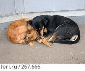 Купить «Спящие бродячие дворняги», фото № 267666, снято 13 сентября 2005 г. (c) Fro / Фотобанк Лори