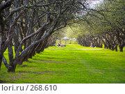 Лес. Стоковое фото, фотограф Недорез Александр / Фотобанк Лори