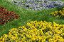 Разноцветная клумба. Фиалки, фото № 272262, снято 31 марта 2007 г. (c) Федор Королевский / Фотобанк Лори