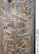Купить «Следы насекомых на старом бревне», фото № 273262, снято 2 мая 2008 г. (c) Parmenov Pavel / Фотобанк Лори