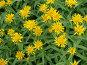 Желтые цветы, фото № 275238, снято 8 июля 2007 г. (c) Дмитрий Кобзев / Фотобанк Лори