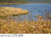 Озеро в тайге. Стоковое фото, фотограф Юля Волкова / Фотобанк Лори