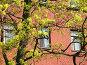 Ветви цветущего клена на фоне стены, фото № 276342, снято 2 мая 2008 г. (c) Заноза-Ру / Фотобанк Лори