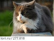 Купить «Кошка, лежащая на скамейке», фото № 277818, снято 1 мая 2008 г. (c) Павел Преснов / Фотобанк Лори