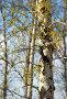 Березовые сережки, фото № 279474, снято 14 апреля 2008 г. (c) Юрий Брыкайло / Фотобанк Лори