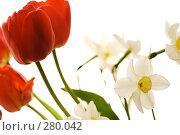 Весенний букет цветов. Тюльпан и нарциссы, фото № 280042, снято 3 мая 2008 г. (c) Евгений Захаров / Фотобанк Лори