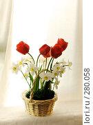 Весенний букет цветов. Тюльпан и нарциссы, фото № 280058, снято 3 мая 2008 г. (c) Евгений Захаров / Фотобанк Лори