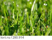 Купить «Капли на траве», фото № 280914, снято 15 сентября 2007 г. (c) Максим Горпенюк / Фотобанк Лори