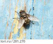 Купить «Муха на стене», фото № 281270, снято 30 марта 2008 г. (c) Максим Рыжов / Фотобанк Лори