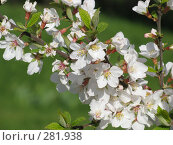 Купить «Райские цветочки», фото № 281938, снято 26 апреля 2008 г. (c) Мария Коробкина / Фотобанк Лори