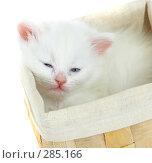 Купить «Котёнок в коробке», фото № 285166, снято 26 марта 2007 г. (c) Андрей Армягов / Фотобанк Лори
