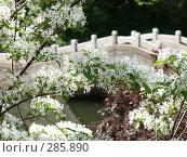 Цветущий сад. Стоковое фото, фотограф Комоедова Зоя Николаевна / Фотобанк Лори