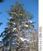 Купить «Зимний лес», фото № 286026, снято 25 февраля 2007 г. (c) Безрукова Ирина / Фотобанк Лори