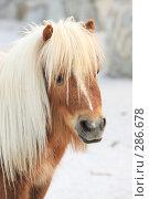 Купить «Пони», эксклюзивное фото № 286678, снято 26 апреля 2008 г. (c) Дмитрий Неумоин / Фотобанк Лори