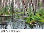 Купить «Болото на Среднерусской возвышенности», фото № 289822, снято 30 июня 2007 г. (c) Сергей Сынтин / Фотобанк Лори