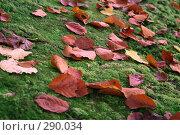 Купить «Осенние листья», фото № 290034, снято 26 октября 2007 г. (c) Юрий Гник / Фотобанк Лори