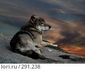 Купить «Волк», фото № 291238, снято 2 октября 2005 г. (c) sav / Фотобанк Лори