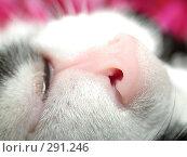 Купить «Нос кошки», фото № 291246, снято 20 октября 2005 г. (c) sav / Фотобанк Лори