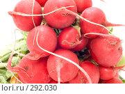 Купить «Редис, макро», фото № 292030, снято 19 мая 2008 г. (c) Угоренков Александр / Фотобанк Лори