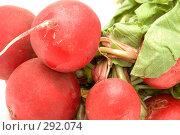 Купить «Редис, крупный план», фото № 292074, снято 19 мая 2008 г. (c) Угоренков Александр / Фотобанк Лори