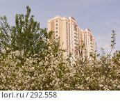 Купить «Химки. Вид на новый дом микрорайона Юбилейный из старого вишнёвого сада деревни Бутаково.», эксклюзивное фото № 292558, снято 2 мая 2008 г. (c) Тамара Заводскова / Фотобанк Лори