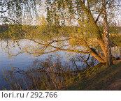 Купить «Золотое кольцо. Золотой Плёс на Волге. Пейзаж с прибрежными деревьями, освещёнными последними лучами солнца», эксклюзивное фото № 292766, снято 11 мая 2008 г. (c) Тамара Заводскова / Фотобанк Лори