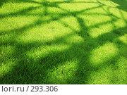 Купить «Тени на траве», фото № 293306, снято 17 мая 2008 г. (c) Александр Катайцев / Фотобанк Лори
