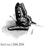 Купить «Бабочка адмирал (Pyrameis atalanta) сидит на пальце руки. Штриховой рисунок из старой книги.», фото № 294354, снято 19 августа 2018 г. (c) Чертопруд Сергей / Фотобанк Лори