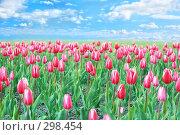 Купить «Поле тюльпанов», фото № 298454, снято 24 мая 2008 г. (c) Вероника Галкина / Фотобанк Лори