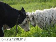 Купить «Кто кого забодает», фото № 298818, снято 2 мая 2008 г. (c) Артем Ефимов / Фотобанк Лори