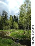 Купить «Природа подмосковья», фото № 300246, снято 11 мая 2008 г. (c) Абдурагимова Наталия / Фотобанк Лори