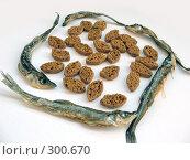 Купить «Сушеная корюшка и ржаные сухарики», фото № 300670, снято 26 апреля 2008 г. (c) Заноза-Ру / Фотобанк Лори