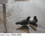 Купить «Голуби», фото № 300906, снято 25 марта 2008 г. (c) Софья Ханджи / Фотобанк Лори