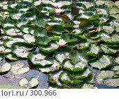 Купить «Пруд с водяными лилиями», фото № 300966, снято 13 августа 2005 г. (c) Евгения Лаврова / Фотобанк Лори