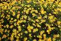 Фон горизонтальный. Желтые цветы, эксклюзивное фото № 302530, снято 5 мая 2008 г. (c) Татьяна Лата / Фотобанк Лори