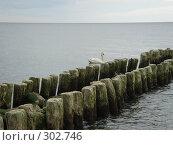 Балтийские дубовые волнорезы. Стоковое фото, фотограф Александр Новиков / Фотобанк Лори
