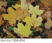 Купить «Листья осени», фото № 304454, снято 3 октября 2007 г. (c) Ирина Стюфеева / Фотобанк Лори
