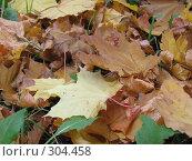 Купить «Листья осени», фото № 304458, снято 3 октября 2007 г. (c) Ирина Стюфеева / Фотобанк Лори