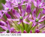 Купить «Цветок», фото № 304598, снято 31 мая 2008 г. (c) Ivan Markeev / Фотобанк Лори