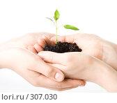 Купить «Маленький росток в ладонях», фото № 307030, снято 28 мая 2008 г. (c) Мельников Дмитрий / Фотобанк Лори