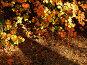 Золотые листья осени, фото № 307378, снято 29 сентября 2007 г. (c) Sergey Toronto / Фотобанк Лори