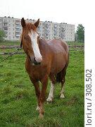 Купить «Конь», фото № 308502, снято 18 мая 2008 г. (c) Oksana Mahrova / Фотобанк Лори